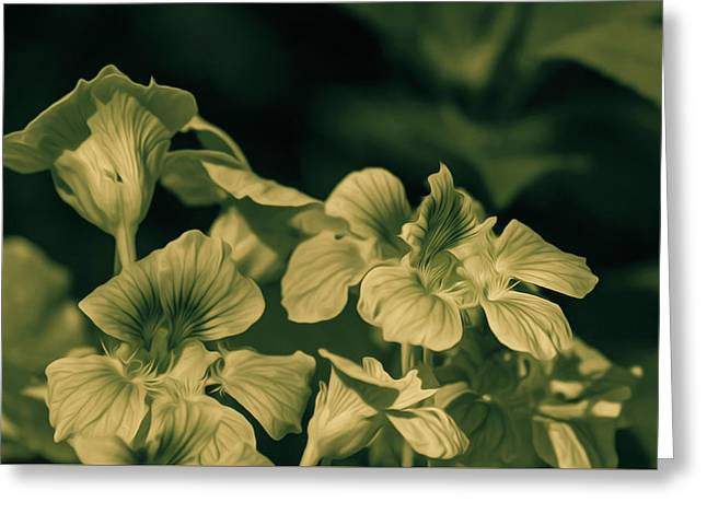 Nasturtium Black And White Greeting Card