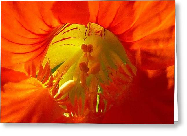 Nasturtium Inner Light Greeting Card by Lori Seaman