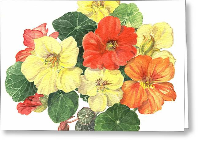 Nasturtiums Greeting Card by Maureen Carter