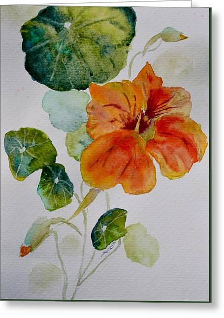 Nasturtiums Study 3 Greeting Card