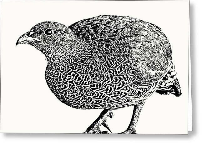 Natal Spurfowl Full Figure Greeting Card
