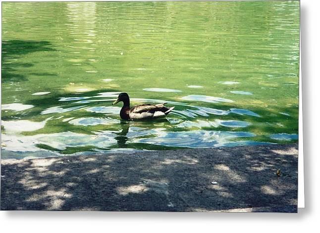 Greeting Card featuring the photograph National Duck by Judyann Matthews