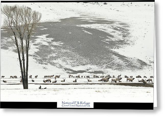 National Elk Refuge Greeting Card