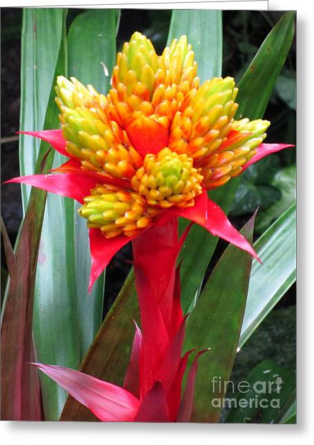 National Flower 2 Greeting Card by Randall Weidner