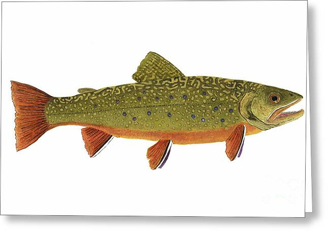 Native Brook Trout Greeting Card