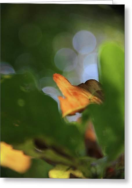 Natural Abstract Greeting Card