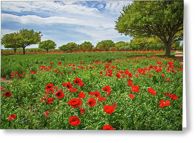 Natural Beauty Of The Hill Country Greeting Card by Lynn Bauer