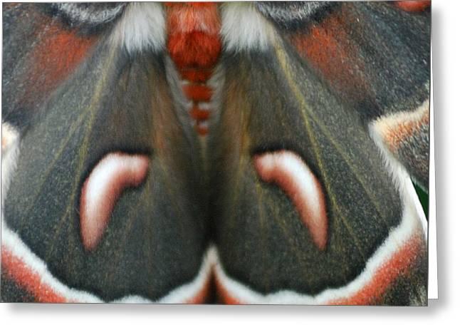 Natural Creation Greeting Card