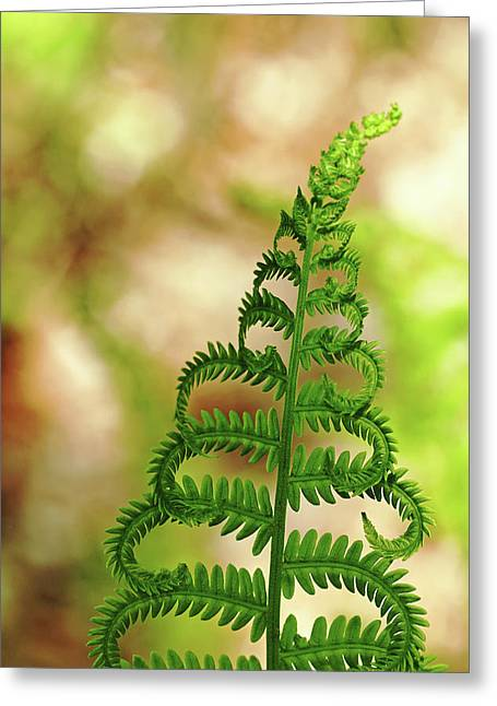 Natural Curls Greeting Card by Debbie Oppermann