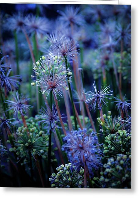 Natural Fireworks 4791 H_2 Greeting Card