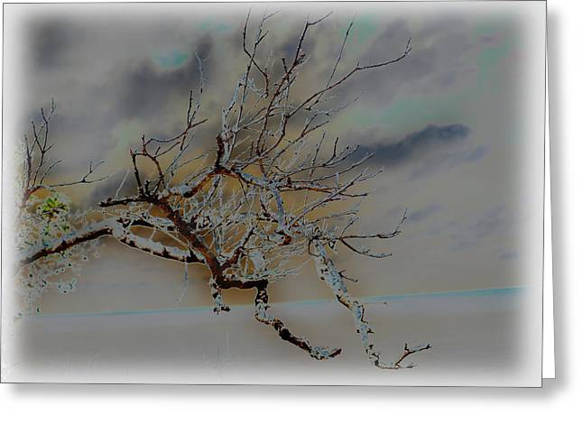 Natural Inversion -1 Greeting Card by Amanda Vouglas