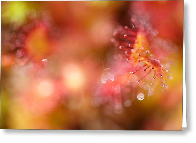 Carnivorous Greeting Cards - Natural Jewelery Greeting Card by Roeselien Raimond