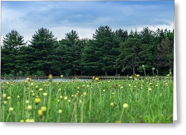 Evergreen Lake - A Groundhog View Greeting Card
