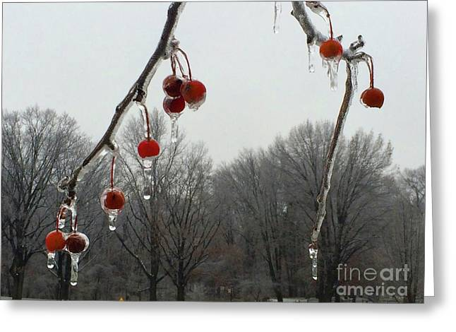 Natural Ornaments In A Frozen Landscape Greeting Card