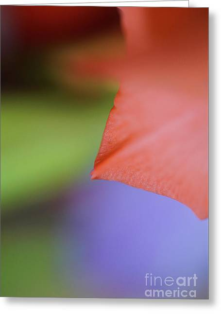 Natural Primary Colors Greeting Card