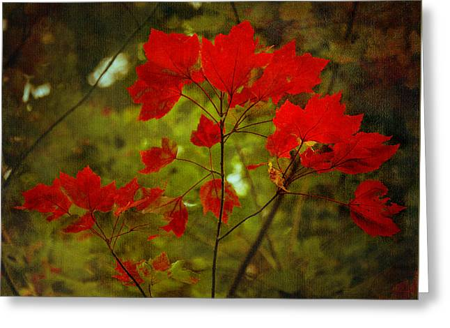 Natural Red Maple Leaves Greeting Card by Loriental Photography