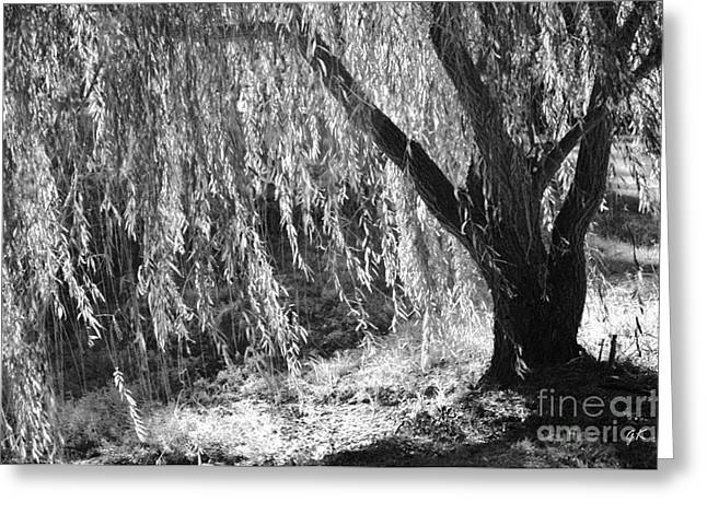 Greeting Card featuring the photograph Natural Screen by Gerlinde Keating - Galleria GK Keating Associates Inc