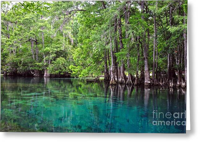 Natural Spring Greeting Card by Debbie Green