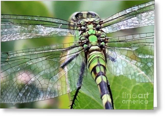 Natural Stained Glass Greeting Card by Carol Groenen