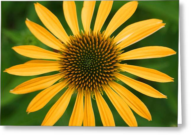 Natural Symmetry Greeting Card by Jean Haynes