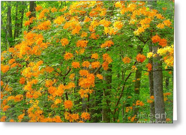 Natural Wild Azaleas  Greeting Card