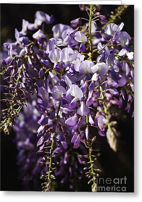 Natural Wisteria Bouquet Greeting Card