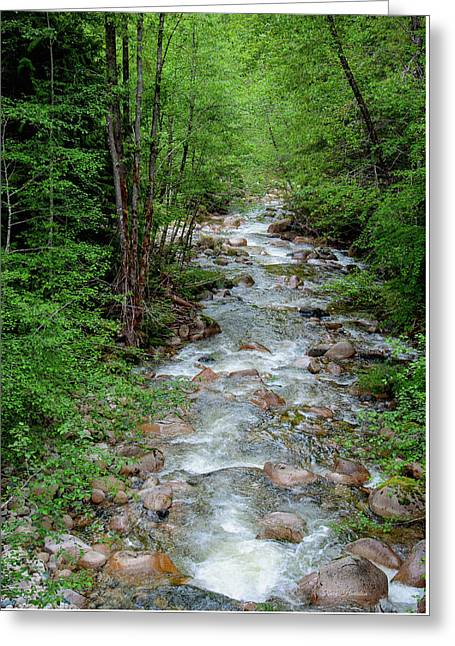 Naturally Pure Stream Backroad Discovery Greeting Card