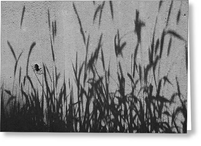 Nature As Shadow Greeting Card by Lenore Senior
