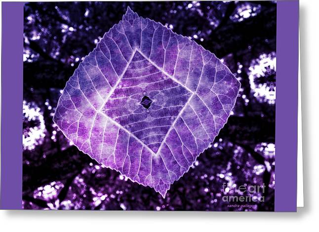 Nature Awakened Greeting Card by Sandra Gallegos