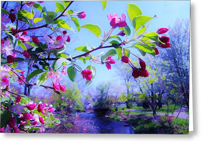 Nature Awakening Greeting Card