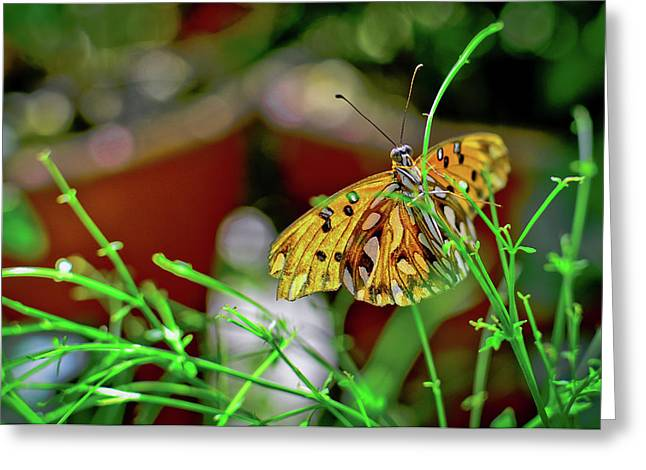 Nature - Butterfly And Plants Greeting Card
