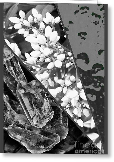 Nature Collage In Black And White Greeting Card