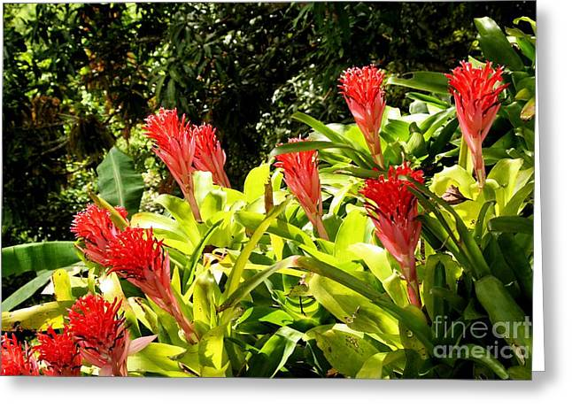 Greeting Card featuring the photograph Nature Exotic by The Art of Alice Terrill