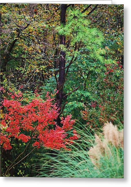 Nature In All Her Beauty Greeting Card by Trudi Southerland