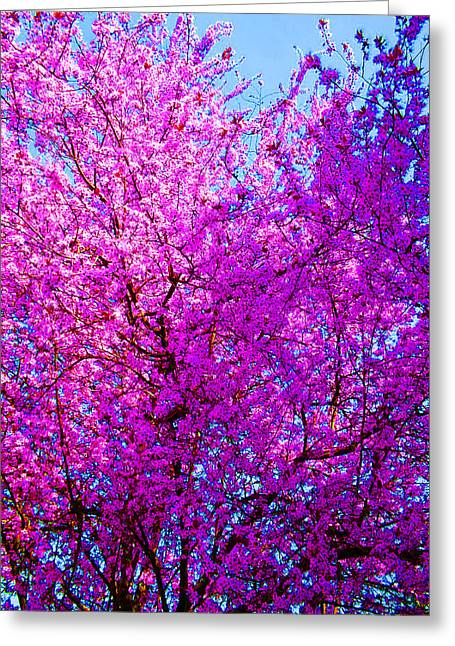 Nature In Bloom Greeting Card