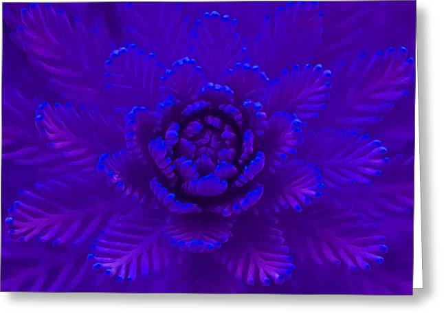 Nature In Blue Greeting Card by Stacey Chiew