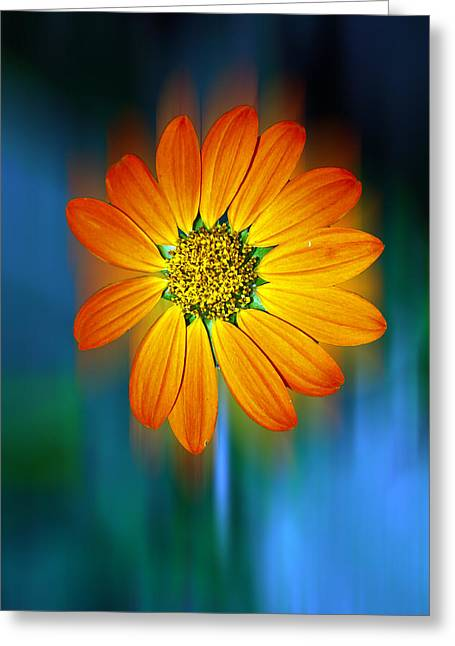 Nature In Motion Greeting Card by Wendy Mogul