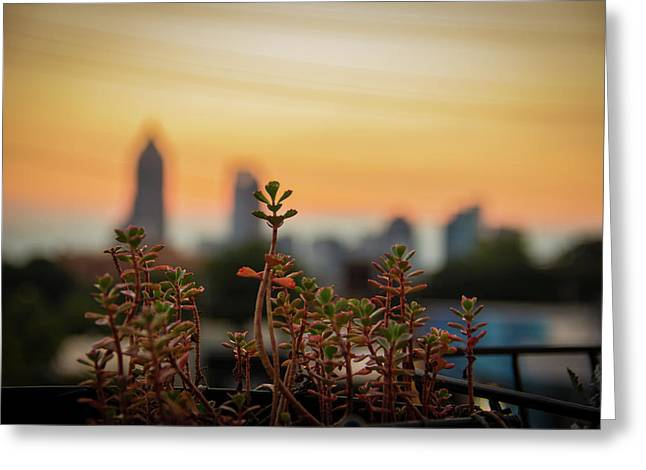 Nature In The City Greeting Card