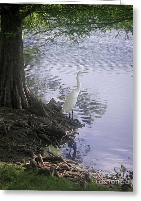 Nature In The Wild - Musings By A Lake Greeting Card by Lucyna A M Green