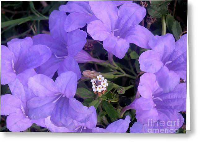 Nature In The Wild - Ring Around The Posy Greeting Card by Lucyna A M Green