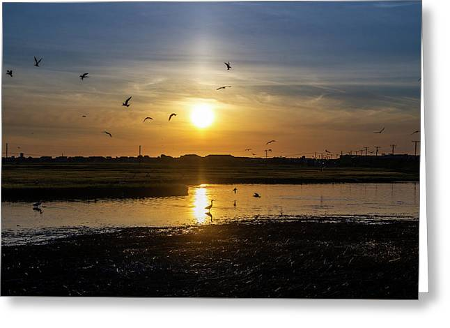 Nature Is Busy At Sunrise Greeting Card by Bill Cannon