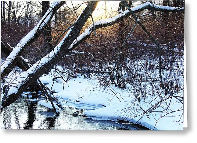 Nature Mixes Her Fire With Ice In Winter Woodland Greeting Card by Terrance DePietro