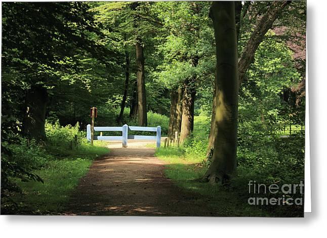 Nature Reserve Netherlands  Greeting Card