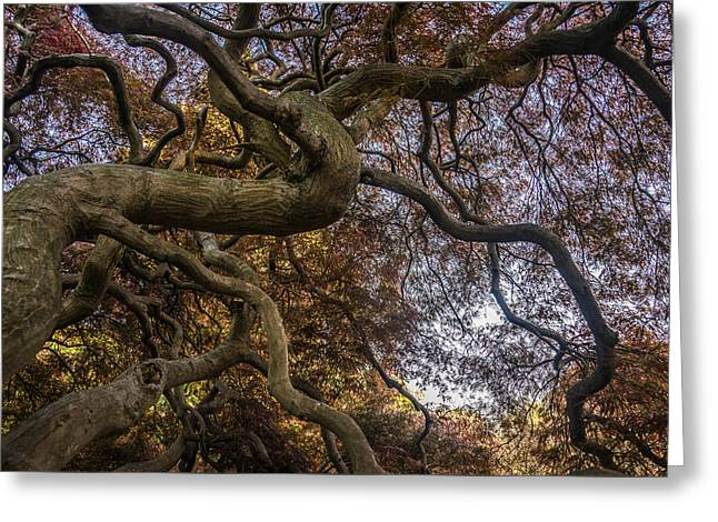 Nature Tangle Greeting Card by Kristopher Schoenleber