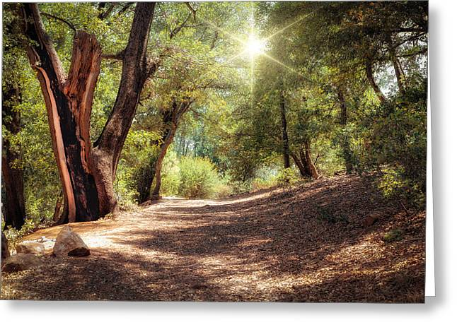 Nature Trail Greeting Card