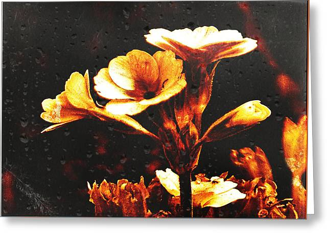 Nature Uncovered  Greeting Card by Andrew Hunter