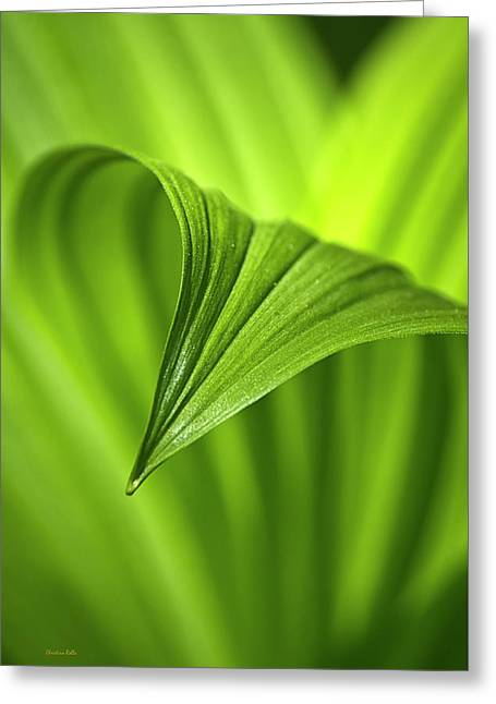 Nature Unfurls Greeting Card by Christina Rollo