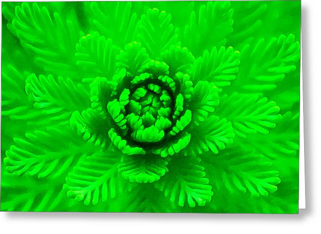 Nature's Abstract  Greeting Card by Stacey Chiew