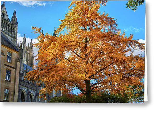 Greeting Card featuring the photograph Natures Architecture by Mitch Cat