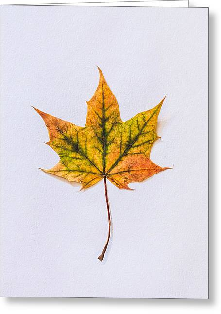 Natures Art Greeting Card by Kate Morton